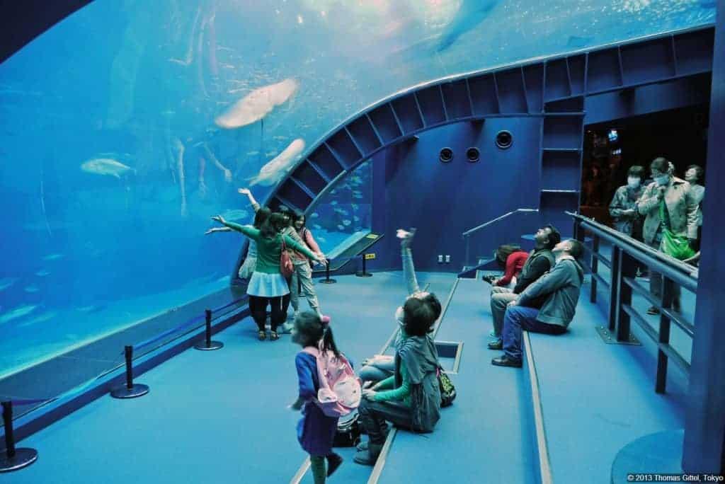 Tour ke jepang 2016 murah maret Tour ke jepang 2016 Tour ke jepang april 2016 Tour ke jepang januari 2016 mei 2016 desember 2016 Tour ke jepang juni 2016 Okinawa Churaumi aquarium