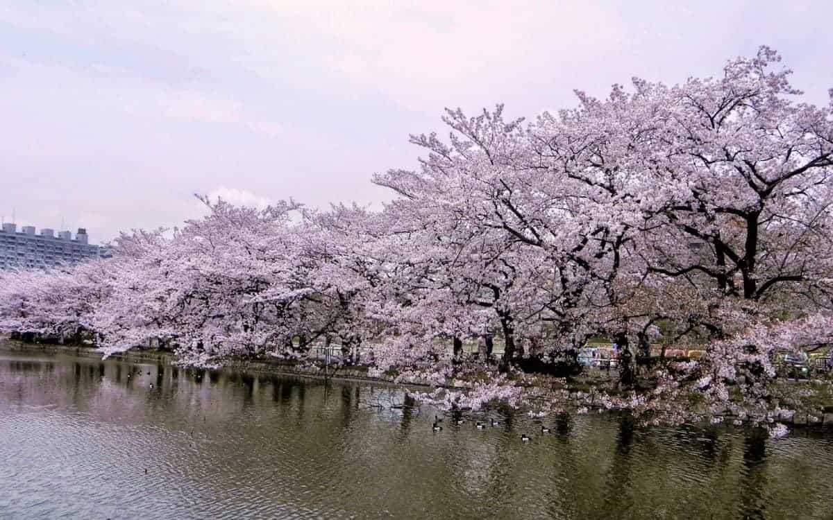 Ueno Park Jepang Tokyo Paket Tour Ke Jepang