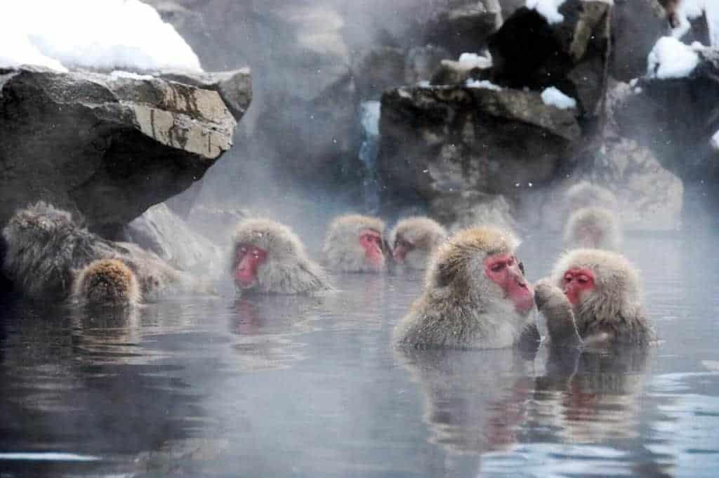 Jigokudani Monkey Park travel murah ke jepang 2016 trip murah ke jepang paket travel murah ke jepang