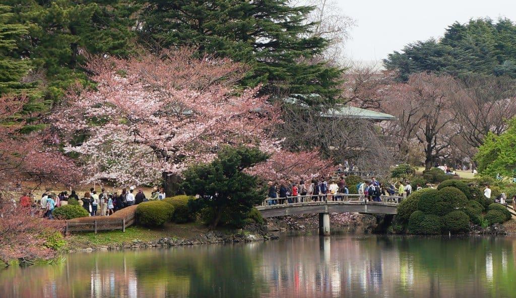 Paket Tour Wisata Jepang Musim Sakura 29 Maret - 3 April 2018 2