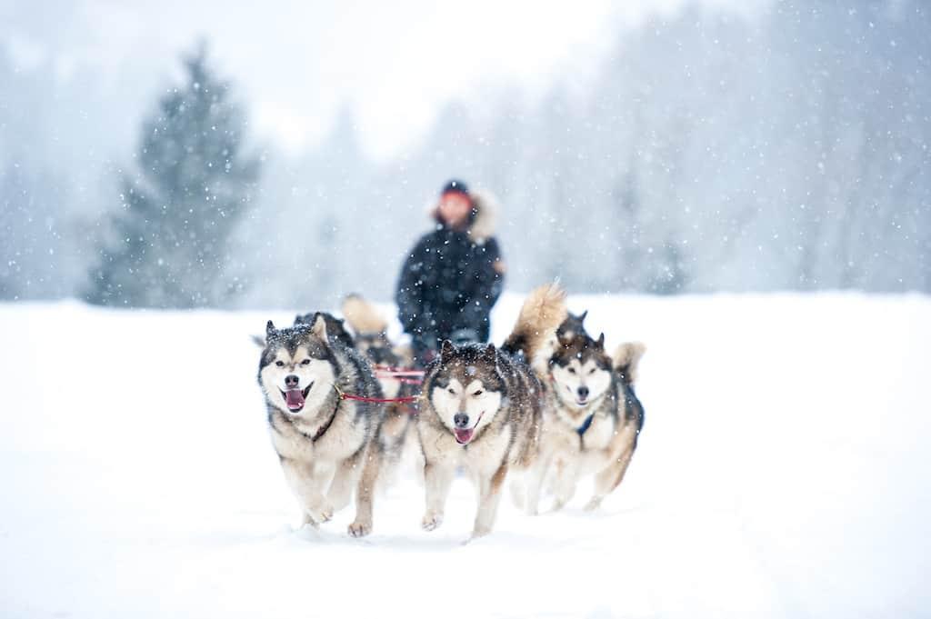 paket tour ke jepang hokkaido winter